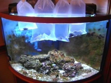 30april2009-mexican-hogfish